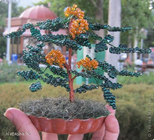 Деревья из бисера и натуральных