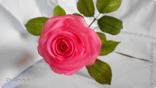 Розовая роза фото 2