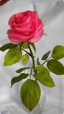 Розовая роза фото 3