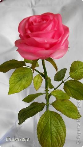 Розовая роза фото 1