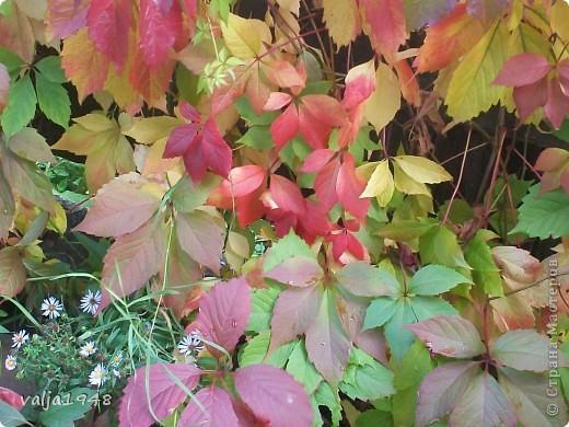 Здравствуйте дорогие жители Страны  Мастеров! Я  сегодня хочу показать маленькую зарисовку об осени!Мы все с нетерпением ждём прихода весны, радуемся зелёным листочкам, а потом лето с её теплом и богатством цветов изобилием ягод в садах! А когда наступает период прихода осени мы начинаем ворчать и говорить, что опять дожди, слякоть, грязь, становится холоднее и темнее, забывая о том, что у осени свои привилегии! Она приносит грибы и ягоды в лесах.  А какими красивыми и необыкновенными красками  расписывает небо по утрам, смешивает краски и деревья становятся необыкновенно красивыми, яркими, как на празднике! Вот и мы посмотрим как пришла осень к нам северо-запад! фото 5