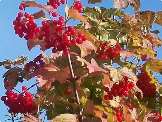 Здравствуйте дорогие жители Страны  Мастеров! Я  сегодня хочу показать маленькую зарисовку об осени!Мы все с нетерпением ждём прихода весны, радуемся зелёным листочкам, а потом лето с её теплом и богатством цветов изобилием ягод в садах! А когда наступает период прихода осени мы начинаем ворчать и говорить, что опять дожди, слякоть, грязь, становится холоднее и темнее, забывая о том, что у осени свои привилегии! Она приносит грибы и ягоды в лесах.  А какими красивыми и необыкновенными красками  расписывает небо по утрам, смешивает краски и деревья становятся необыкновенно красивыми, яркими, как на празднике! Вот и мы посмотрим как пришла осень к нам северо-запад! фото 10