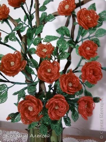 Поделка изделие Бисероплетение Розы из бисера на коряге Бисер фото 2.