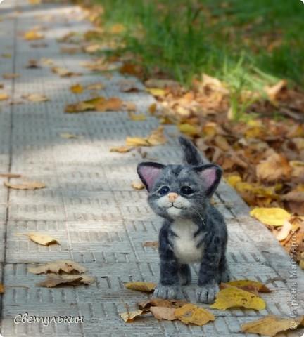 Котёнок фото 6