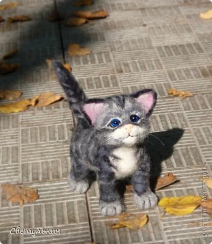 Котёнок фото 7