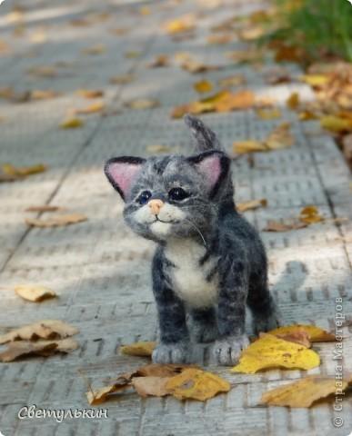Котёнок фото 5