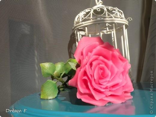 роза из хф фото 2
