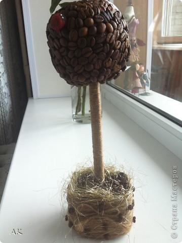 Первое кофейное подобие деревца