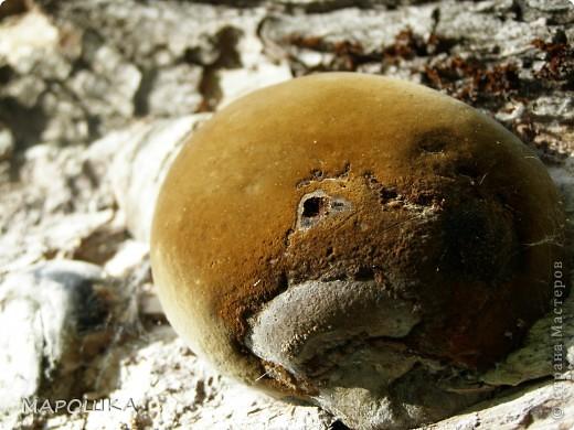 на песке лежали семена василька и лучистое настроение передалось нам и мы с дочей пошли искать еще смайлики... фото 3