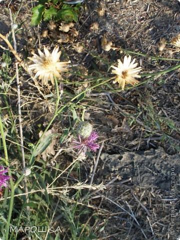 на песке лежали семена василька и лучистое настроение передалось нам и мы с дочей пошли искать еще смайлики... фото 8