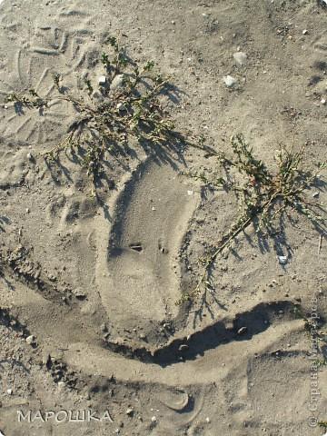на песке лежали семена василька и лучистое настроение передалось нам и мы с дочей пошли искать еще смайлики... фото 9