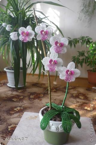 орхидея 2 фото 1