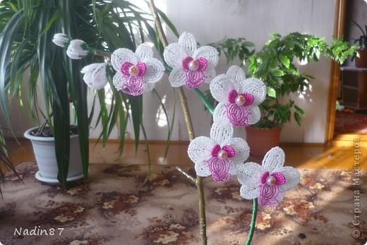 орхидея 2 фото 2