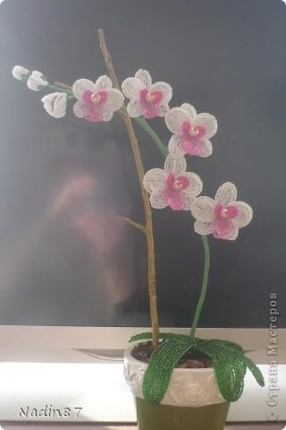 орхидея 2 фото 3