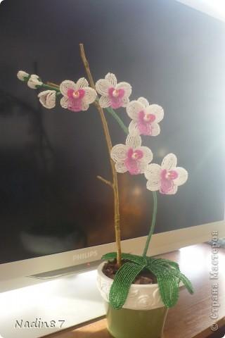 орхидея 2 фото 4
