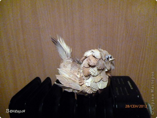 птичка фото 1
