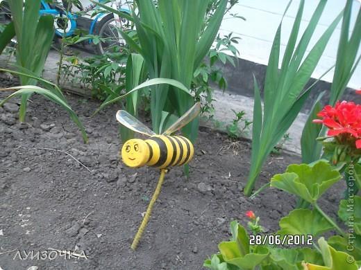 пчелки на винограднике фото 6