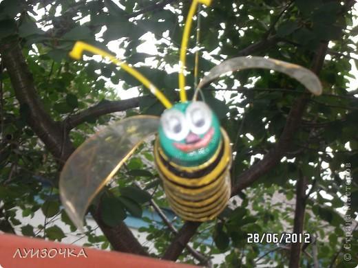 пчелки на винограднике фото 2