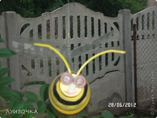 пчелки на винограднике фото 3