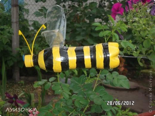 пчелки на винограднике фото 7