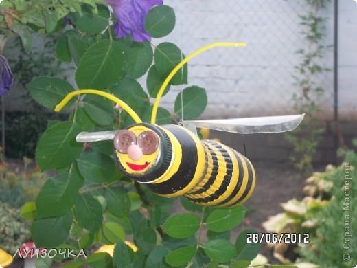 пчелки на винограднике фото 8