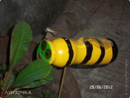 пчелки на винограднике фото 12