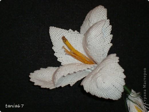Эту лилию я сделала для панно. Для работы взяла нити : ирис №5 фото 1