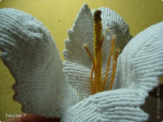 Эту лилию я сделала для панно. Для работы взяла нити : ирис №5 фото 5