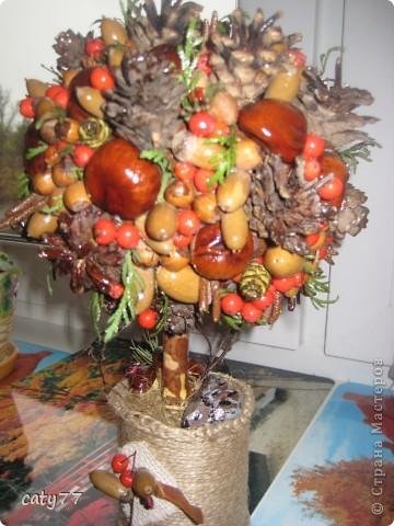 Моё осеннее дерево! фото 4