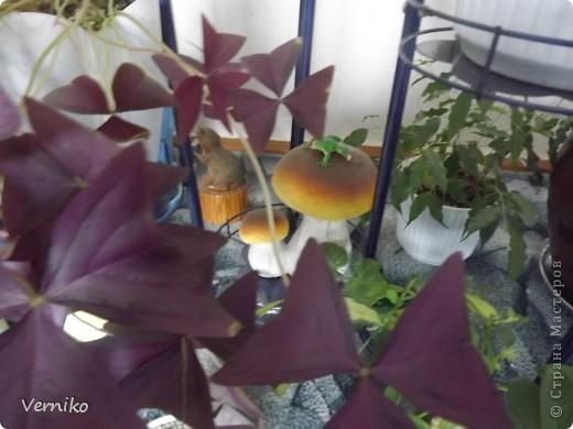 Вот такой охранник и новый житель появился в моем комнатном саду! Теперь я надеюсь никакие вредители и болезни не страшны моим цветочкам. фото 3
