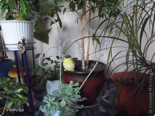Вот такой охранник и новый житель появился в моем комнатном саду! Теперь я надеюсь никакие вредители и болезни не страшны моим цветочкам. фото 2