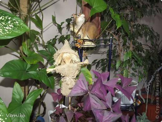 Вот такой охранник и новый житель появился в моем комнатном саду! Теперь я надеюсь никакие вредители и болезни не страшны моим цветочкам. фото 1
