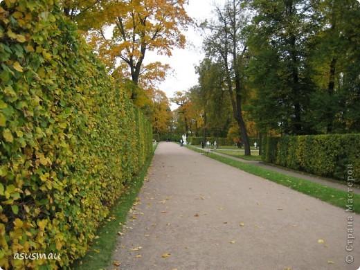 """Доброго времени суток , дорогие жители Страны !!! Приглашаю вас на небольшую прогулку по Екатериненскому Парку в Царском селе.  В Екатерининском саду златая осень.  Она - волшебница и ей красивой быть.  Ковёр дубрав, меж облаками просинь.  Вид паутины - серебряная нить.   Рубин ольхи, цветов осенних скромность.  И журавлиный клин над головой.  Осенних первых, заморозков робость.  Зеркален пруд. Лист дуба золотой.   Плывет туман над самою водою.  Из самоцветов радуга в росе.  Грустит дворец, знать вспомнилось былое,  С ним вместе статуи в задумчивой красе.   Играет луч, у ивушек на косах.  Морские чайки, утки на пруду  Покой везде: в лесу и на покосах  На всех тропинках в сказочном саду:   Янтарь берез, а рядом - зелень сосен,  Огни рябин, лужаек изумруд.  Свой лист резной и клен ещё не сбросил...  Здесь бабье лето! Тишина, уют.   Красиво! Жаль – уходит осень!  Придёт зима с ветрами долгих вьюг.  И я прошу: златую осень - очень:  """"Не уходи. Побудь ещё, мой друг"""". (viktor-arch ) фото 6"""