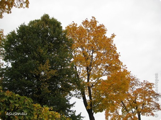 """Доброго времени суток , дорогие жители Страны !!! Приглашаю вас на небольшую прогулку по Екатериненскому Парку в Царском селе.  В Екатерининском саду златая осень.  Она - волшебница и ей красивой быть.  Ковёр дубрав, меж облаками просинь.  Вид паутины - серебряная нить.   Рубин ольхи, цветов осенних скромность.  И журавлиный клин над головой.  Осенних первых, заморозков робость.  Зеркален пруд. Лист дуба золотой.   Плывет туман над самою водою.  Из самоцветов радуга в росе.  Грустит дворец, знать вспомнилось былое,  С ним вместе статуи в задумчивой красе.   Играет луч, у ивушек на косах.  Морские чайки, утки на пруду  Покой везде: в лесу и на покосах  На всех тропинках в сказочном саду:   Янтарь берез, а рядом - зелень сосен,  Огни рябин, лужаек изумруд.  Свой лист резной и клен ещё не сбросил...  Здесь бабье лето! Тишина, уют.   Красиво! Жаль – уходит осень!  Придёт зима с ветрами долгих вьюг.  И я прошу: златую осень - очень:  """"Не уходи. Побудь ещё, мой друг"""". (viktor-arch ) фото 7"""