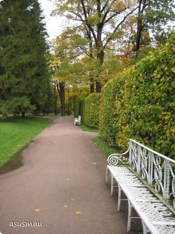 """Доброго времени суток , дорогие жители Страны !!! Приглашаю вас на небольшую прогулку по Екатериненскому Парку в Царском селе.  В Екатерининском саду златая осень.  Она - волшебница и ей красивой быть.  Ковёр дубрав, меж облаками просинь.  Вид паутины - серебряная нить.   Рубин ольхи, цветов осенних скромность.  И журавлиный клин над головой.  Осенних первых, заморозков робость.  Зеркален пруд. Лист дуба золотой.   Плывет туман над самою водою.  Из самоцветов радуга в росе.  Грустит дворец, знать вспомнилось былое,  С ним вместе статуи в задумчивой красе.   Играет луч, у ивушек на косах.  Морские чайки, утки на пруду  Покой везде: в лесу и на покосах  На всех тропинках в сказочном саду:   Янтарь берез, а рядом - зелень сосен,  Огни рябин, лужаек изумруд.  Свой лист резной и клен ещё не сбросил...  Здесь бабье лето! Тишина, уют.   Красиво! Жаль – уходит осень!  Придёт зима с ветрами долгих вьюг.  И я прошу: златую осень - очень:  """"Не уходи. Побудь ещё, мой друг"""". (viktor-arch ) фото 13"""