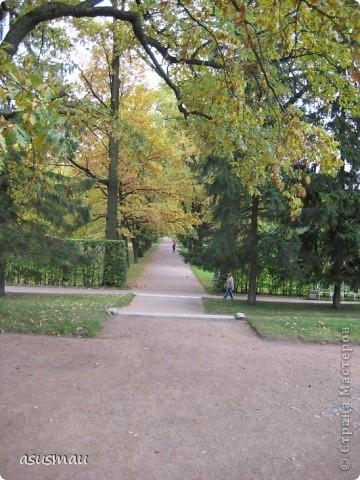 """Доброго времени суток , дорогие жители Страны !!! Приглашаю вас на небольшую прогулку по Екатериненскому Парку в Царском селе.  В Екатерининском саду златая осень.  Она - волшебница и ей красивой быть.  Ковёр дубрав, меж облаками просинь.  Вид паутины - серебряная нить.   Рубин ольхи, цветов осенних скромность.  И журавлиный клин над головой.  Осенних первых, заморозков робость.  Зеркален пруд. Лист дуба золотой.   Плывет туман над самою водою.  Из самоцветов радуга в росе.  Грустит дворец, знать вспомнилось былое,  С ним вместе статуи в задумчивой красе.   Играет луч, у ивушек на косах.  Морские чайки, утки на пруду  Покой везде: в лесу и на покосах  На всех тропинках в сказочном саду:   Янтарь берез, а рядом - зелень сосен,  Огни рябин, лужаек изумруд.  Свой лист резной и клен ещё не сбросил...  Здесь бабье лето! Тишина, уют.   Красиво! Жаль – уходит осень!  Придёт зима с ветрами долгих вьюг.  И я прошу: златую осень - очень:  """"Не уходи. Побудь ещё, мой друг"""". (viktor-arch ) фото 14"""
