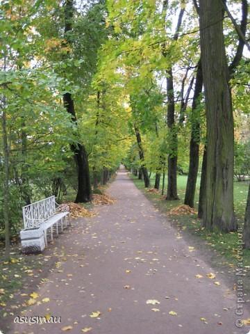 """Доброго времени суток , дорогие жители Страны !!! Приглашаю вас на небольшую прогулку по Екатериненскому Парку в Царском селе.  В Екатерининском саду златая осень.  Она - волшебница и ей красивой быть.  Ковёр дубрав, меж облаками просинь.  Вид паутины - серебряная нить.   Рубин ольхи, цветов осенних скромность.  И журавлиный клин над головой.  Осенних первых, заморозков робость.  Зеркален пруд. Лист дуба золотой.   Плывет туман над самою водою.  Из самоцветов радуга в росе.  Грустит дворец, знать вспомнилось былое,  С ним вместе статуи в задумчивой красе.   Играет луч, у ивушек на косах.  Морские чайки, утки на пруду  Покой везде: в лесу и на покосах  На всех тропинках в сказочном саду:   Янтарь берез, а рядом - зелень сосен,  Огни рябин, лужаек изумруд.  Свой лист резной и клен ещё не сбросил...  Здесь бабье лето! Тишина, уют.   Красиво! Жаль – уходит осень!  Придёт зима с ветрами долгих вьюг.  И я прошу: златую осень - очень:  """"Не уходи. Побудь ещё, мой друг"""". (viktor-arch ) фото 18"""
