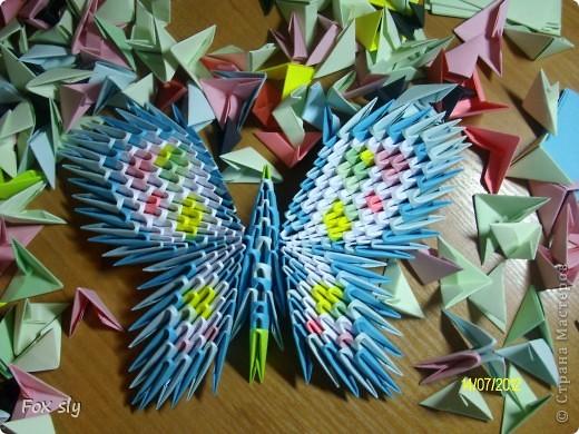 Бабочка большая фото 2