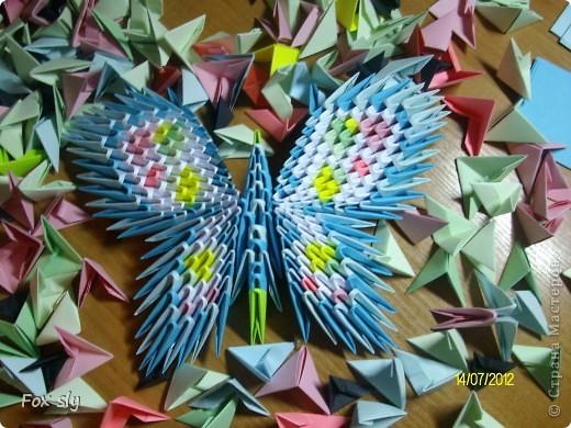 Бабочка большая фото 1