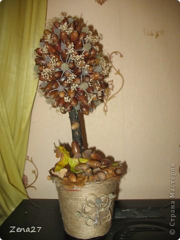 Дубовое деревце.