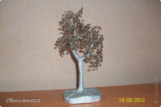 Яблонька в цвету.  фото 3