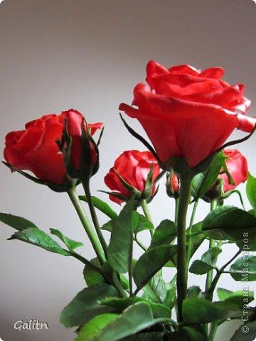 Всем, всем привет! Порадовать вас мне особо нечем, опять розы........... Заказали в подарок на день рождения, цвет и размер ( Высота 45см, бутоны, примерно, 9 см) пожелание заказчика.Вазу она хочет свою. так, что кувшинчик только для фотографии.( А мне он нравится) фото 3