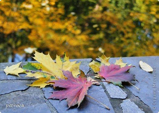 Город Киев, 3 октября, + 25 градусов, солнечно, ну ооочень тепло!!!  Как же можно сидеть дома! Да еще и чудеса вокруг... Например, уже неделю цветет... да-да, каштан!  Осень с весною встретилась?!!! фото 14