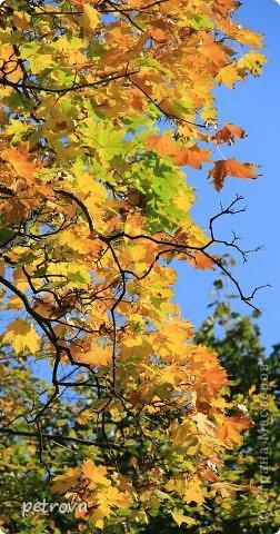 Город Киев, 3 октября, + 25 градусов, солнечно, ну ооочень тепло!!!  Как же можно сидеть дома! Да еще и чудеса вокруг... Например, уже неделю цветет... да-да, каштан!  Осень с весною встретилась?!!! фото 16