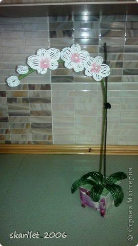 """Первая орхидея.  На фото еще без """"земли"""". Горшочек задекупажила """"фиолетовой орхидеей"""" фото 1"""
