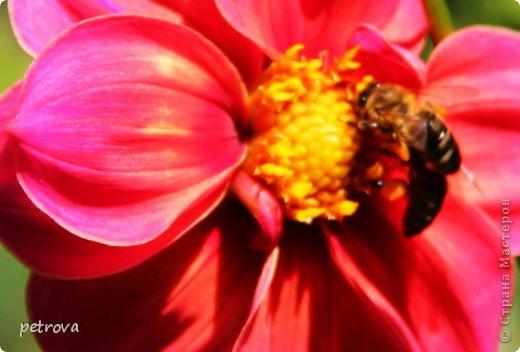 Город Киев, 3 октября, + 25 градусов, солнечно, ну ооочень тепло!!!  Как же можно сидеть дома! Да еще и чудеса вокруг... Например, уже неделю цветет... да-да, каштан!  Осень с весною встретилась?!!! фото 7