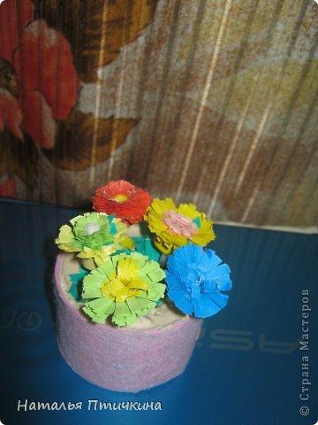 Любимые  мои цветочки фото 1