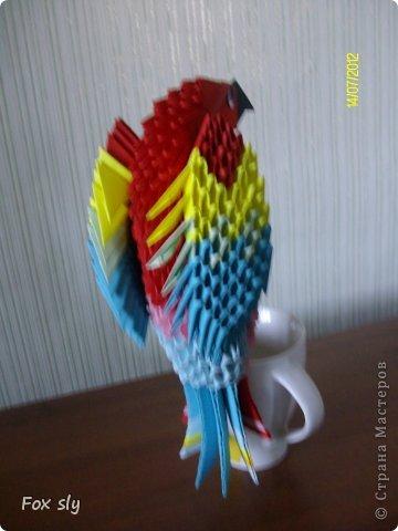 Попугай Какаду фото 2