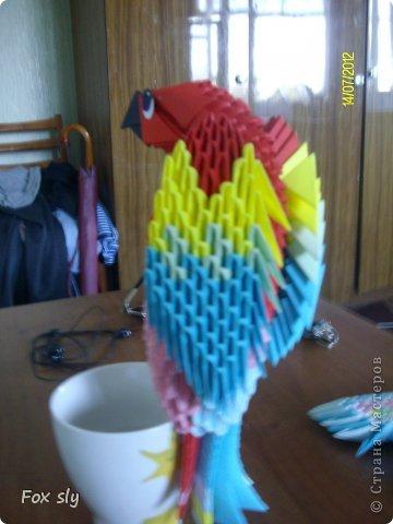 Попугай Какаду фото 5