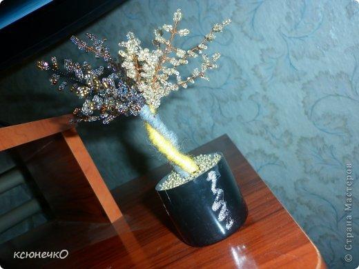 Мое скромное деревце фото 2